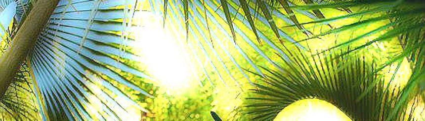 cropped-majorellegarden031.jpg
