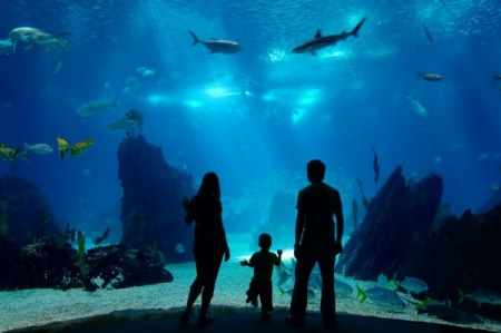 family-at-aquarium-600_zf9m90