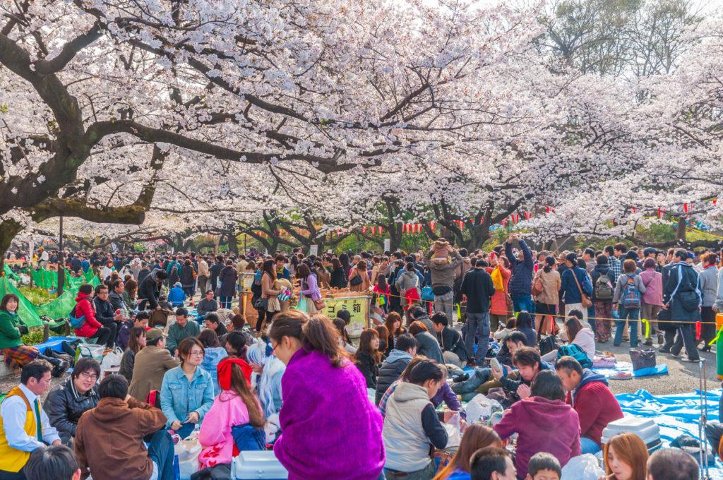 Cherry Blossoms festival in Ueno Park,Tokyo,Japan