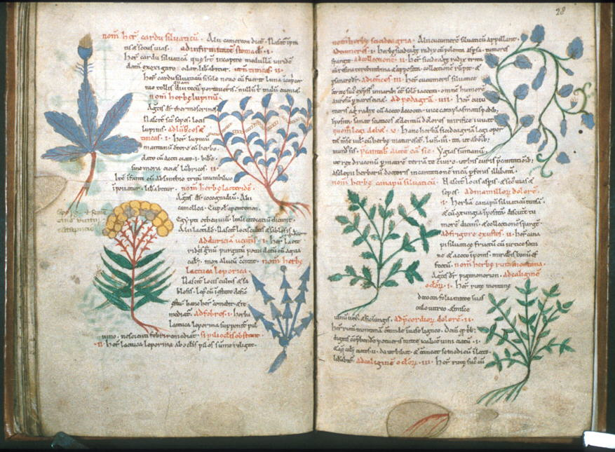 022819-15-History-Medieval-Middle-Ages-Islam-Arab-Science-Biology